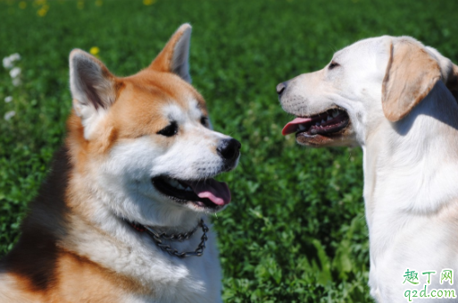 一岁狗狗相当于人类几岁 狗狗一岁训练晚吗1